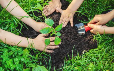 Children plant plants in the garden. Selective focus. nature.